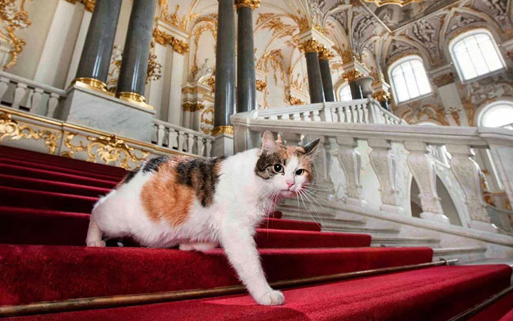 Day of the Hermitage cat in 2021