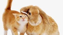 Horoscope for 2021 for Rabbits (Cats)