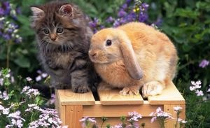 Horoscope for 2021 for a Rabbit (Cat): women and men