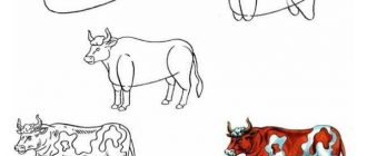 How to draw a Bull for the New year 2021 | draw a white Bull