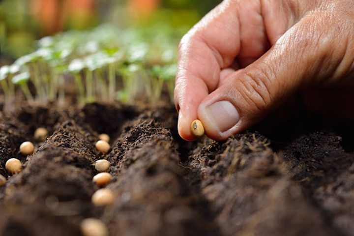 Lunar sowing calendar 2021 | table of sowing and planting for summer residents and gardeners