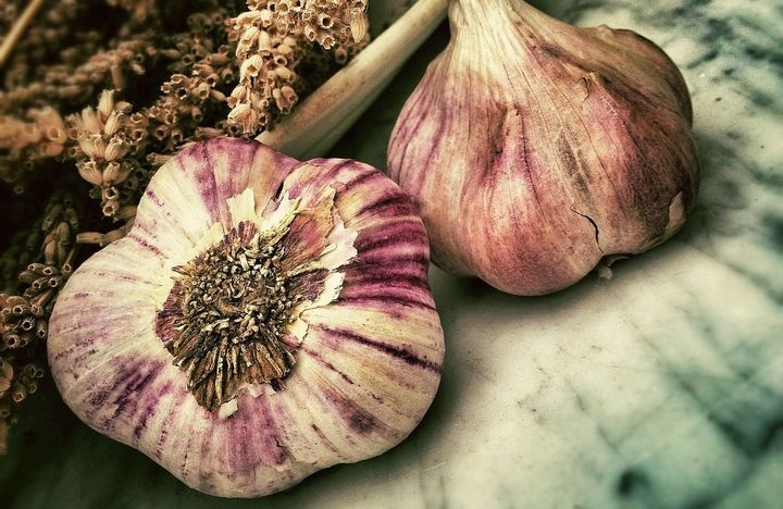 Garlic planting in 2021: when to plant, when to sow, when to dig up