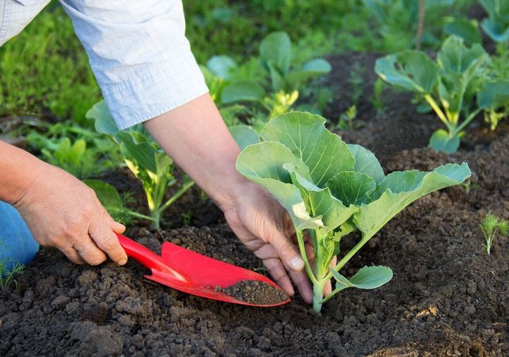 Planting days in April 2021 | planting calendar, for seedlings, in the ground