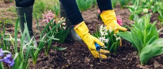 Planting days in March 2021 | planting calendar, for seedlings, in the ground